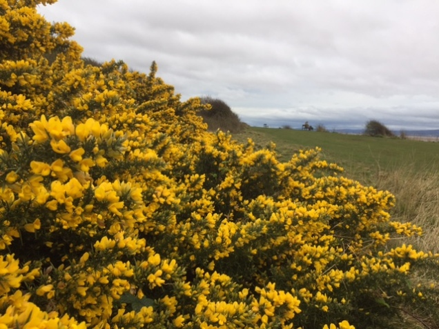 gorse west kirby