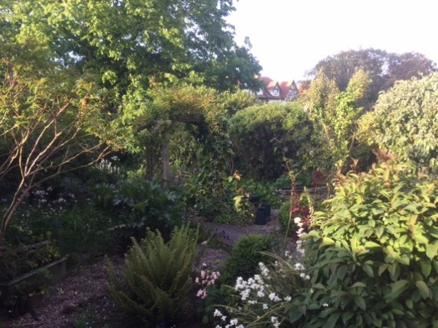 garden 23 may.jpg