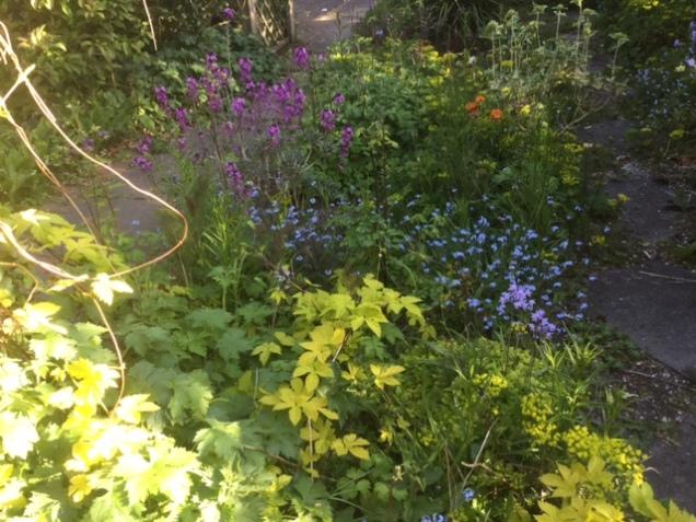 garden 5 may