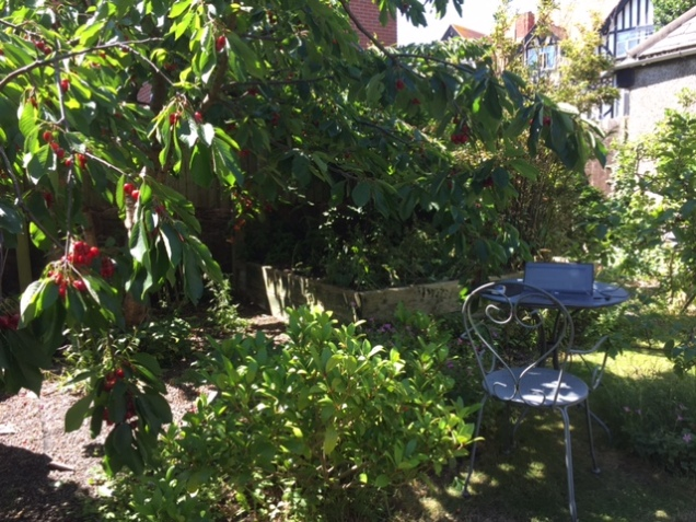 under th tree.JPG