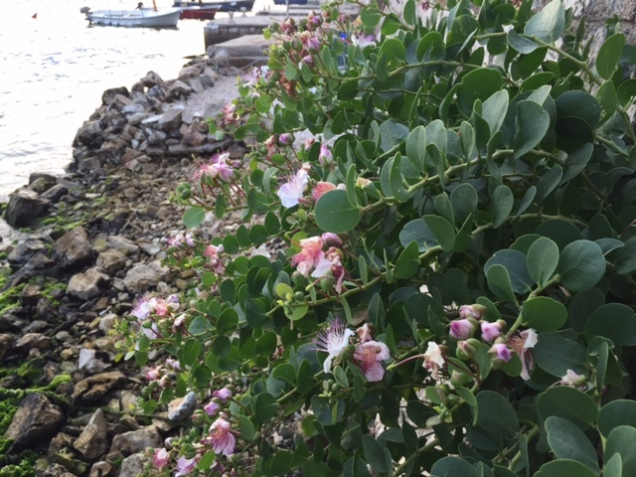 unknown plant growing from wall on seashore