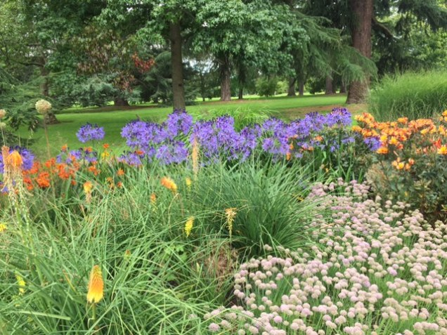 agapanthus and alstromeria at Kew.JPG