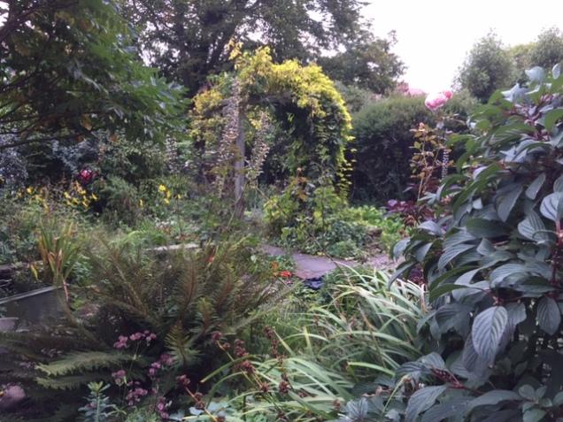 garden at dawn.JPG