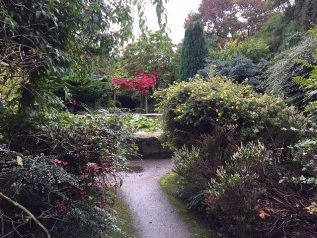 old english garden.JPG