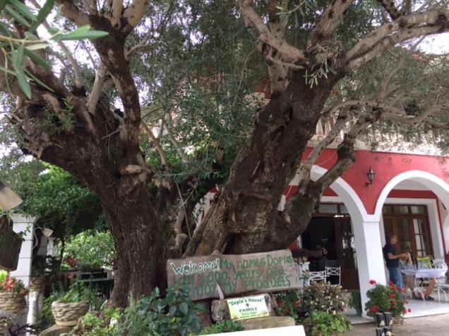 1000 tree.JPG